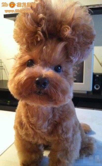 谁能告诉我这是神马发型